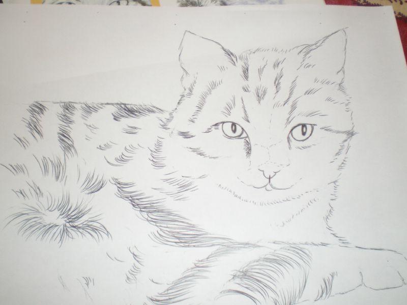 portrait de chat au crayons de couleur domi dessins et peintures. Black Bedroom Furniture Sets. Home Design Ideas