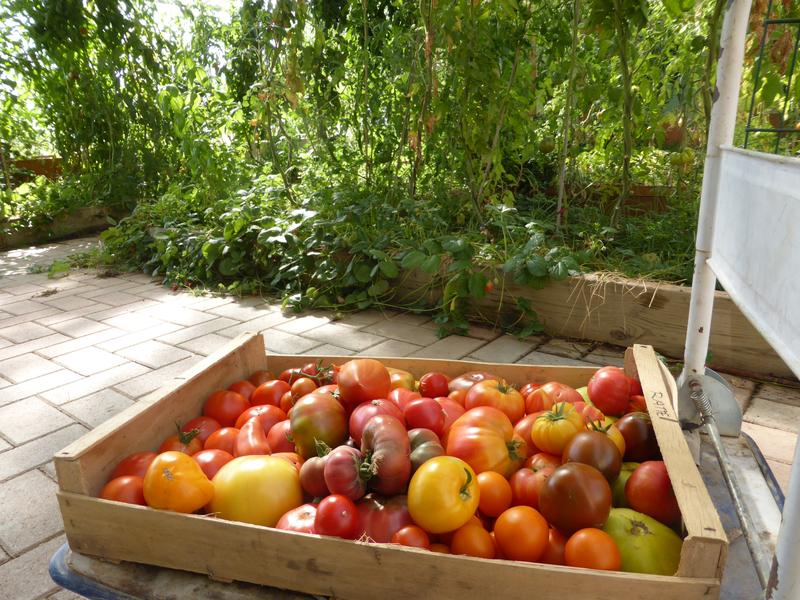 2-tomates (1)