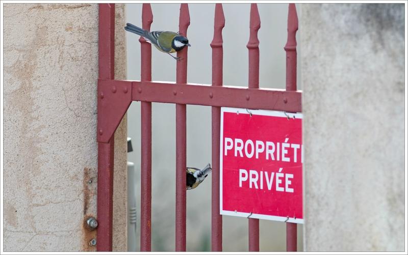 ville mésanges grille propriété privée 1 281216