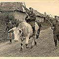 soldat allemand sur une vache