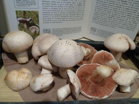 6-champignons (4)