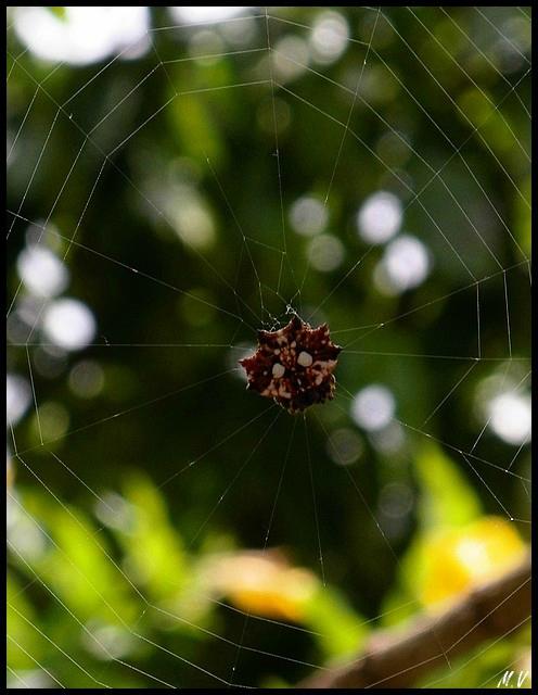 Spiderclown (3)