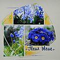 Fleur bleue...
