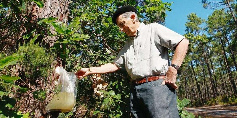 claude-courau-hier-au-porge-montre-le-procede-de-recolte-propre-de-la-resine-qu-il-a-brevete