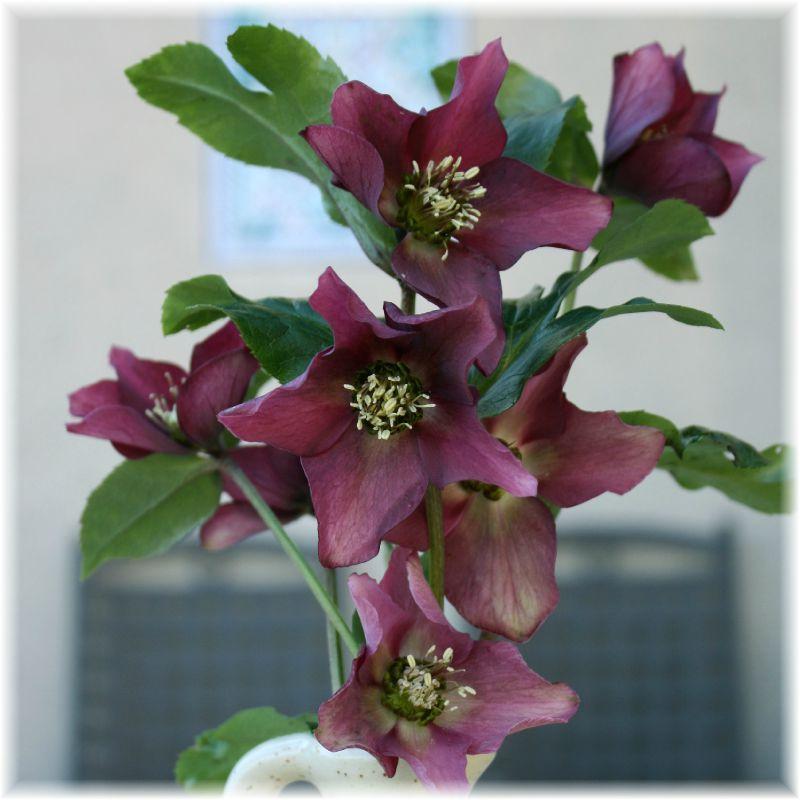 eleboresviolets