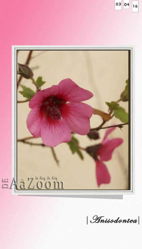 aazoom_ fleurs