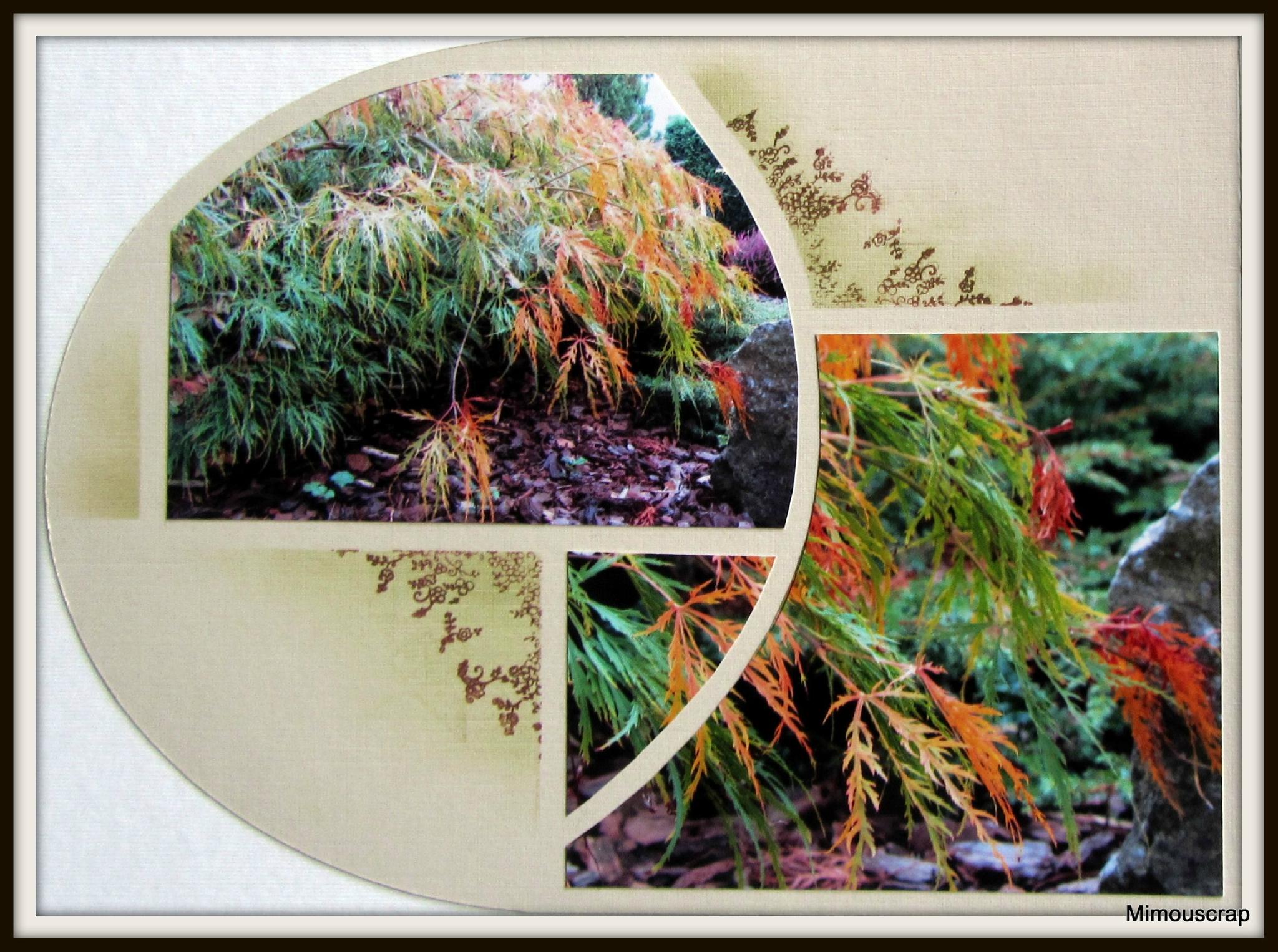 jardin automne 008