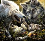FAmille_Loup
