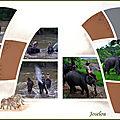 Le bain des éléphants 5