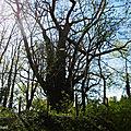 Gros Bois 170418
