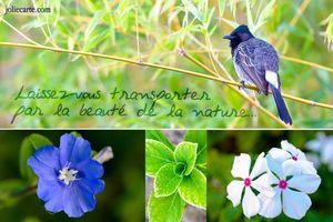 beaute-nature