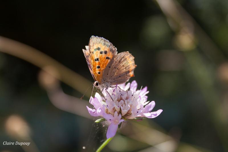 Papillon-fleurb
