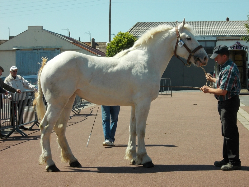 Déesse de Coyecques - 4e 2 ans - Local de Marquise - 16 Juin 2015 - Photo Babeth