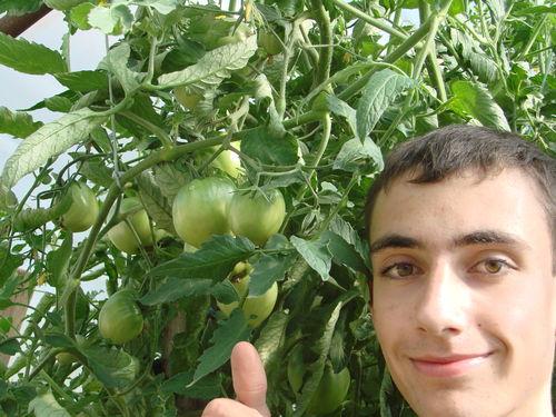 2008 08 02 Cyril a côté de ses tomates coeur de boeuf sous serre