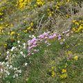 La flore de la côte