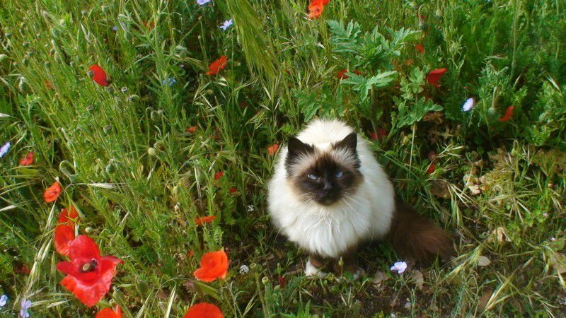 CHAT DE CHRISTIANE MOREAU