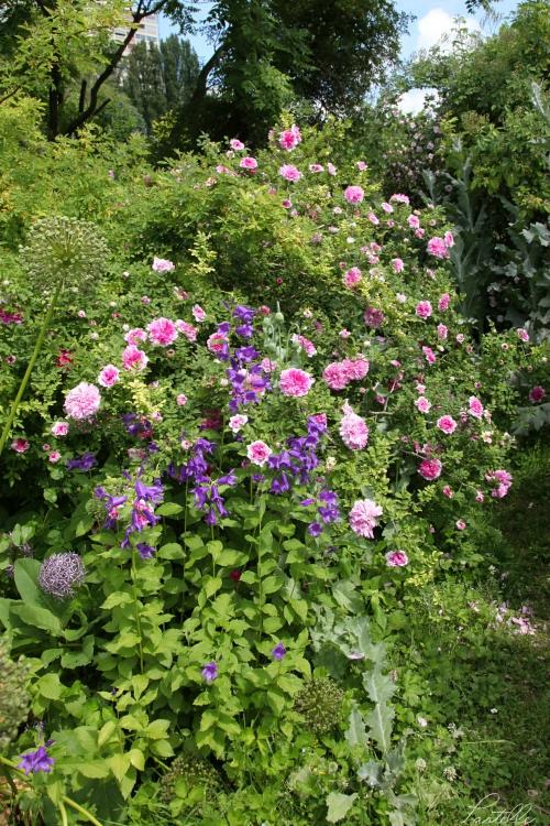 Roses campanules_13 12 06_4495