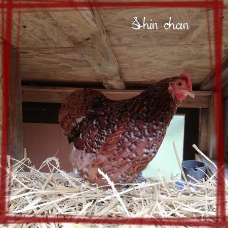 poulettes2