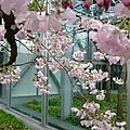Hanami à la fondation cartier pour l'art contemporain