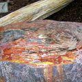 Le tronc d'arbre fossilisé mais avec le Kodak