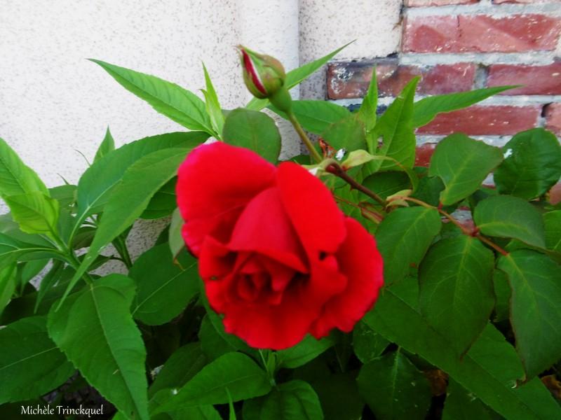 1-Fleurs de Léon 220619