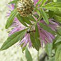 fleurs-de-breche (92)