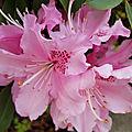 Bouquet du week end # 209 - sem 19