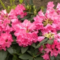 fleurs_urbaines2