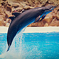 dauphins loro parque2