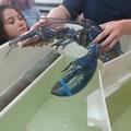 Eva attenntive aux explications (musée du homard, Pictou)