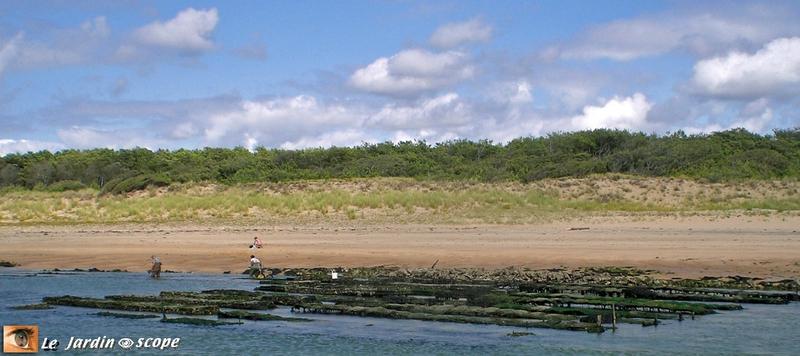 Estuaire du Payré (Les sables-d'Olonne)